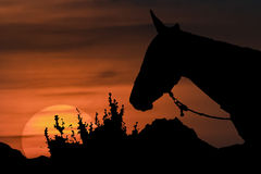 Sunset Scene with Horse Silhouette Illustration Stock Photography