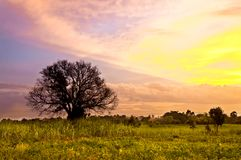 Sunset scene with leaf-fallen tree Stock Images