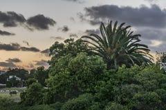 Sunset Scene Leafy Nature Montevideo Uruguay Royalty Free Stock Image