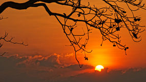 Sunset scene with sun, silhouette of branch of tree Royalty Free Stock Photography