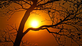 Sunset scene with sun, silhouette of branch of tree Stock Photo