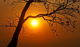 Sunset scene with sun, silhouette of branch of tree Royalty Free Stock Photo