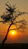 Sunset scene with sun, silhouette of branch of tree Royalty Free Stock Images