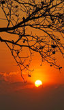 Sunset scene with sun, silhouette of branch of tree Stock Images