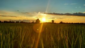 Sunset scene. There is a beautiful  of the sun from the fields Royalty Free Stock Photo
