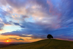 Sunset scene in Tuscan hills. Beautiful sunset evening with lone tree on a Tuscan hill near Pienza in Italy Royalty Free Stock Photos
