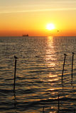Sunset scenery. With birds and ship Stock Images