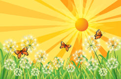 A sunset scenery with butterflies Royalty Free Stock Photos