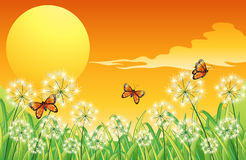 A sunset scenery with three orange butterflies Royalty Free Stock Image