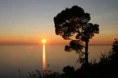 Sunset on the sea. Shilouetted tree in the foreground, the sun sets on the Italian coast near Trieste Stock Photography