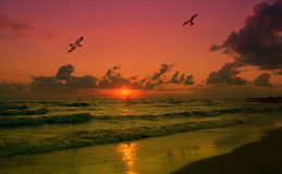 Sunset at the sea. Beautiful sunset on the sea Stock Images