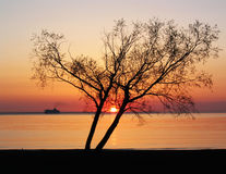 Sunset by the sea stock images