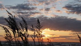 Sunset by the sea. Sunset by the Baltic sea summertime Royalty Free Stock Photos
