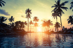 Sunset on the sea coast with palm trees reflection in the water. Stock Photo
