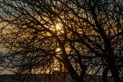 Sunset on the sea coast in yellow through the silhouettes of tree branches stock images