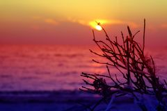 Sunset on sea colorful sky and dry branch palm tree plastic wast. Sunset on sea colorful sky and dry branch palm tree and plastic waste on beach Stock Images