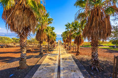 Sunset on the Sea of Galilee. Palm alley leading to the famous  Sea of Galilee. Sunset on the Lake of Kinneret Royalty Free Stock Image