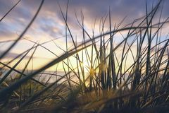 Sunset through sea grass Stock Photos