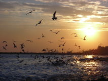 Sunset with sea gulls. In istanbul Royalty Free Stock Photo