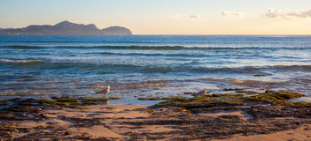 Sunset by the sea with gulls. On Mallorca, Can Picafort Balearic Islands, Spain Stock Photos