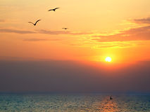 Sunset at sea with seagulls in foreground Royalty Free Stock Image