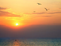 Sunset at sea with seagulls in foreground Royalty Free Stock Photography