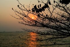 Sunset at sea with silhoette of tree