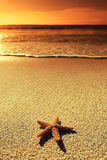 Sunset sea star Stock Photos