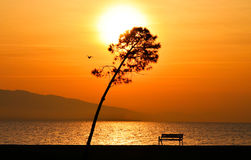 Sunset on the sea. Sun between clouds and  there are a tree,a bench and a flying bird in view, silhouette. Stock Photography