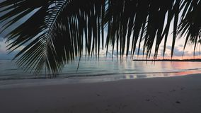 Sunset sea view from palm tree leaf and tropical island beach. Punta Cana resort.  stock footage