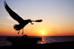 Sunset Seagull Royalty Free Stock Photos