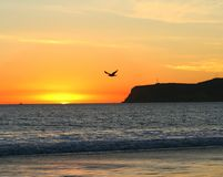 Sunset Seagull. Seagull flies against Southern California beach sunset. San Diego's Point Loma in the background. (Coronado, CA Stock Photography