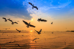 Sunset. Seagull Flying Cross at sunset stock photo