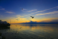 Sunset with seagull Stock Images