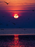 Sunset and Seagulls. Royalty Free Stock Image