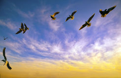 Sunset seagulls background. Sunset  seagulls background postcards. Sky and clouds Royalty Free Stock Image