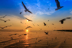 Sunset 2. Seagulls flying across the sunset. A beautiful light at that time stock photography