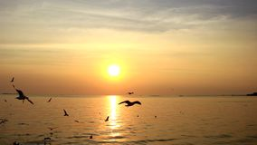 Sunset with seagulls flying. stock footage