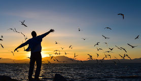 Sunset seagulls and peace Royalty Free Stock Images