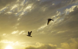 Sunset and seagulls stock image
