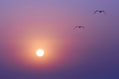 Sunset and seaguls Stock Photo