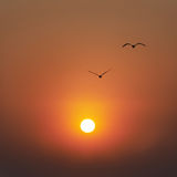 Sunset and seaguls Stock Image