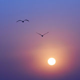 Sunset and seaguls Royalty Free Stock Photography