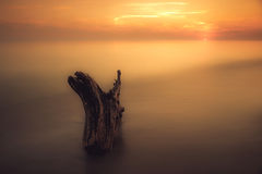 Sunset seascape. Long exposure water with log royalty free stock photography