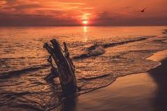 Sunset seascape orange Royalty Free Stock Image