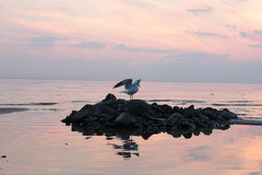 Sunset seascape and Seagull royalty free stock images