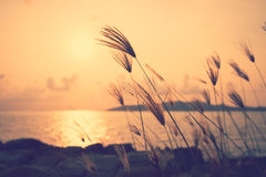 Sunset at the seaside with grass in the foreground .Image has a. Vintage effect applied Royalty Free Stock Photos