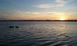 Sunset See-Hunde stockfoto