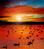 Sunset See mit Wasservögeln Lizenzfreie Stockfotos