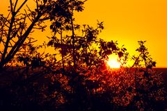 Sunset seen through a beautiful tree with leaves at Dolomite Camp in Etosha National Park Stock Photo